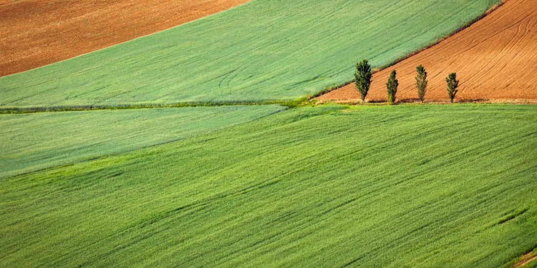 How to choose an adequate plot for a field trial
